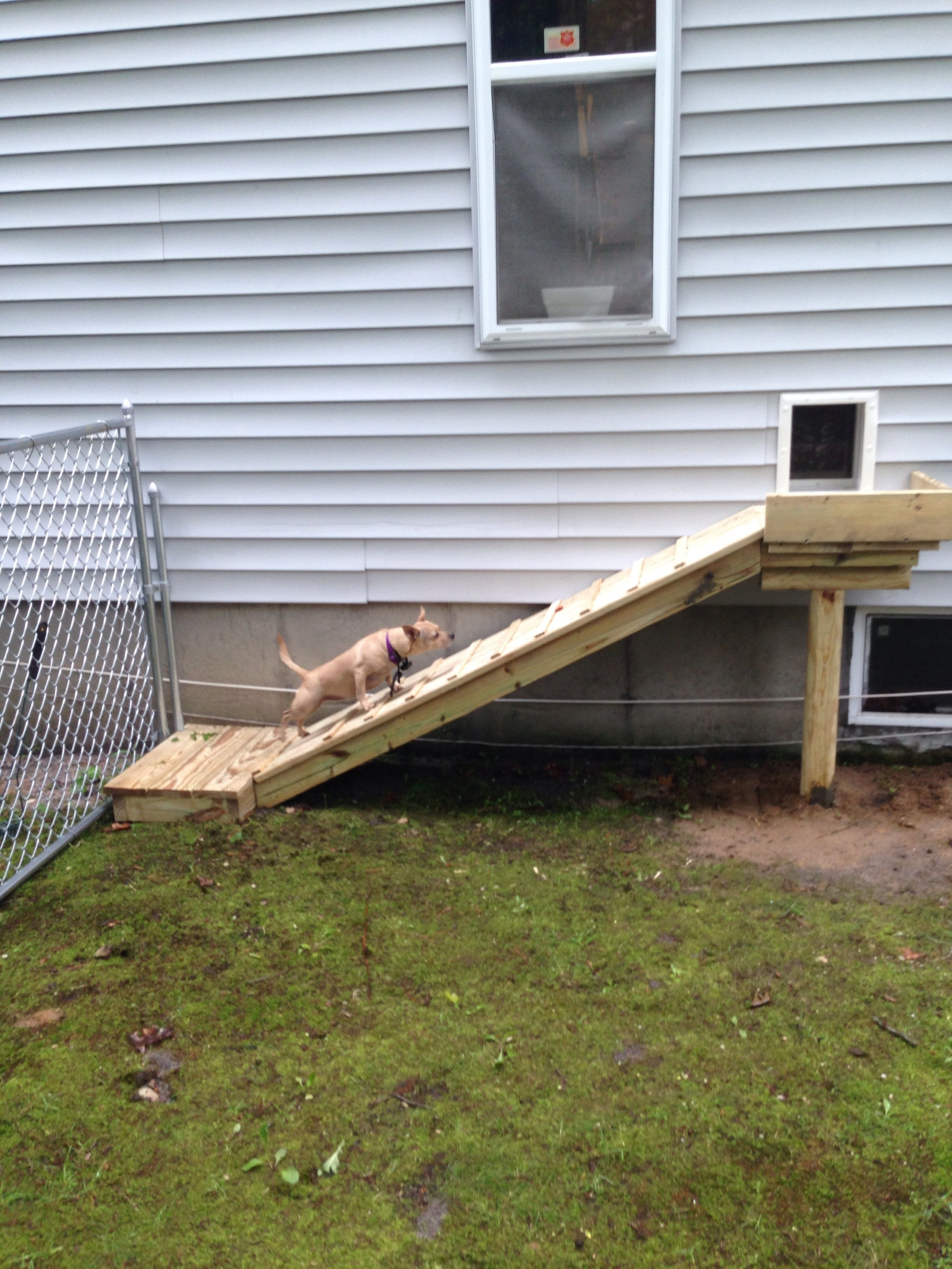 25+ Best Dog Ramp Ideas On Pinterest | Dog Stairs