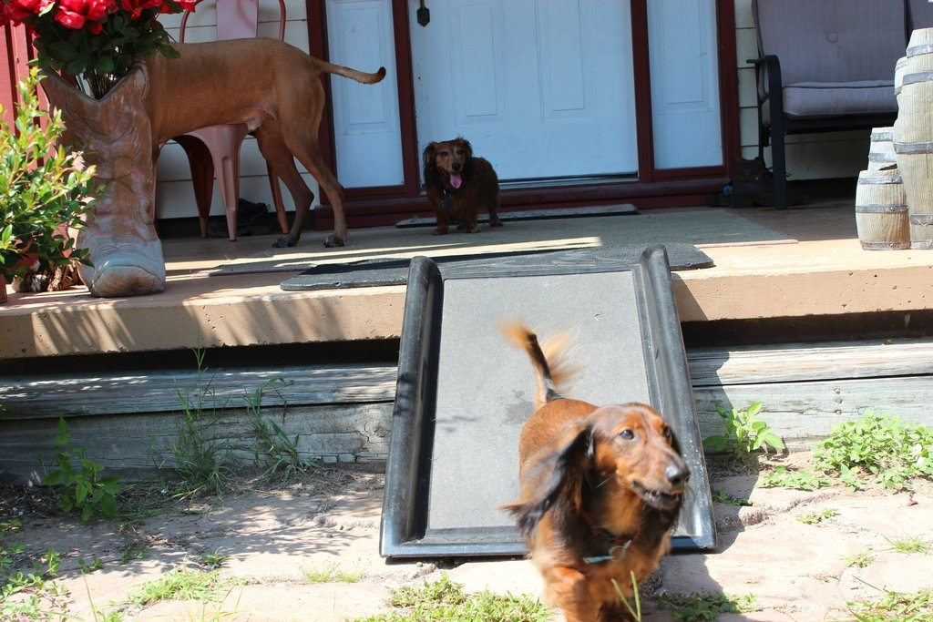 Charmant Outdoor Dog Ramp Design : Keeping Pets Safe With Outdoor