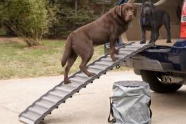 Dog Ramp For Car - SUVs & Trucks