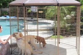 Decorative Dog Kennel