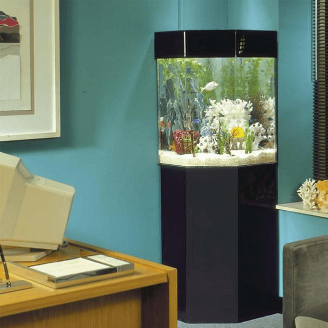 Corner Aquarium With Stand You Ll Love In 2021 Visualhunt