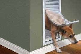 6 Expert Tips To Choose A Pet Door