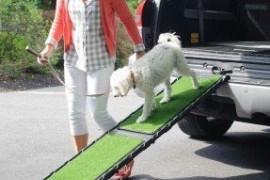 Outdoor Dog Ramp